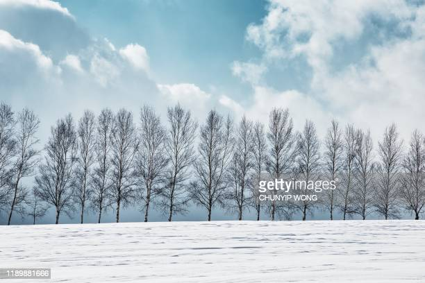 snowy hills and birch trees in biei, hokkaido - snowfield stock pictures, royalty-free photos & images