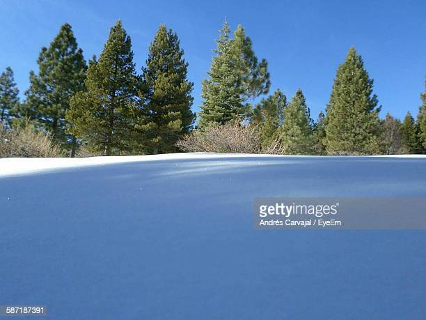 snowy landscape and trees during winter - carvajal stock photos and pictures