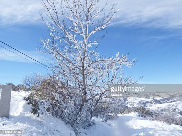 snowy landscape in the high mountain of galicia - arbusto stock pictures, royalty-free photos & images