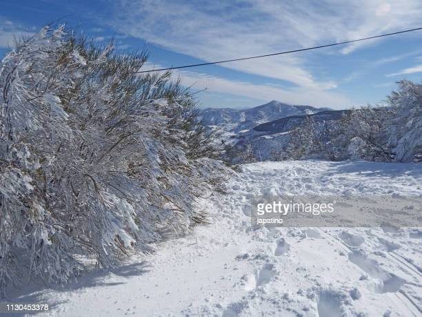 snowy landscape in the mountains of galicia - arbusto stock pictures, royalty-free photos & images