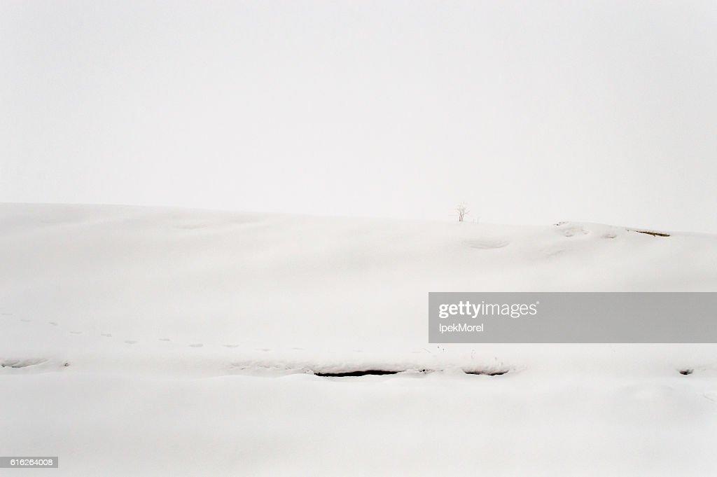 Snowy Landscape of an Empty Field : Stock Photo