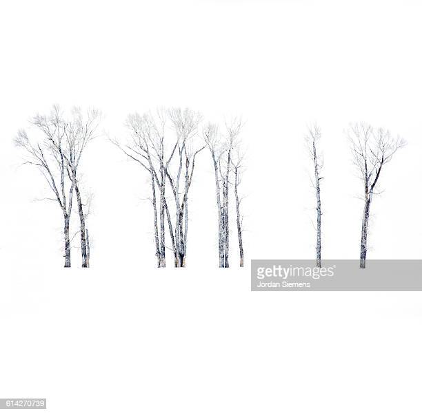 snowy landscape - bozeman stock pictures, royalty-free photos & images