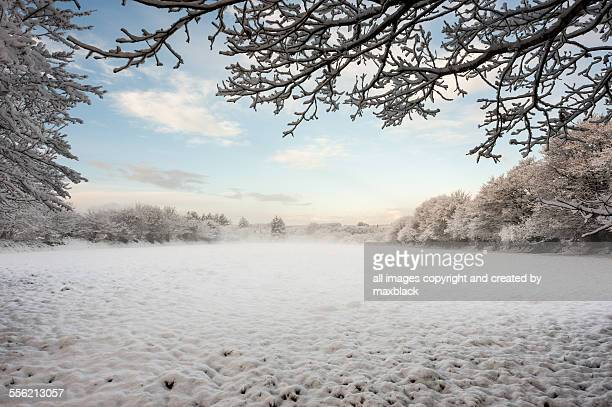 Snowy meadow ,clear sky