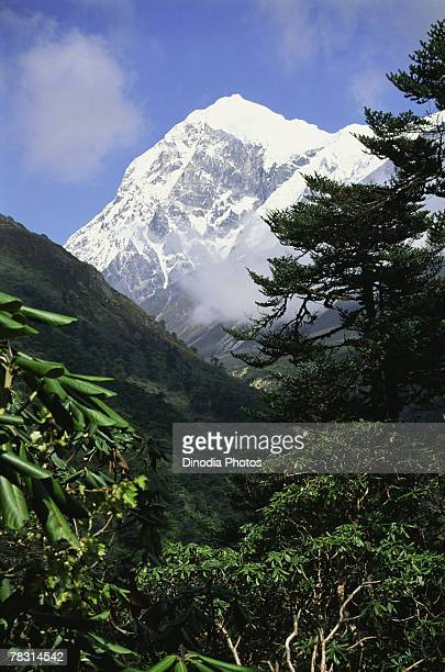 snowy mountain peak from thangsing, sikkim, india - sikkim stock pictures, royalty-free photos & images