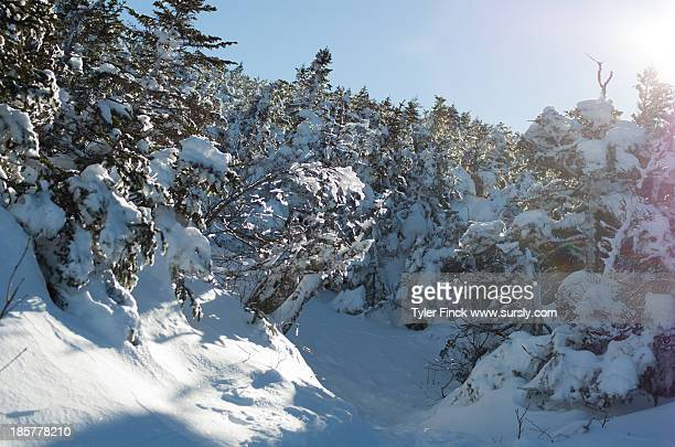 snowy mountain trail - sursly stock pictures, royalty-free photos & images