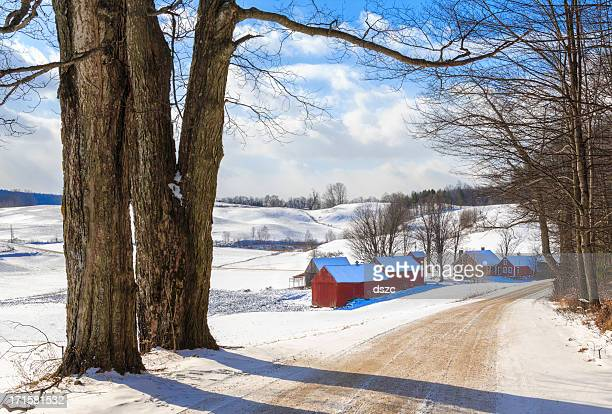 snowy new england countryside in the winter - maple tree stock pictures, royalty-free photos & images
