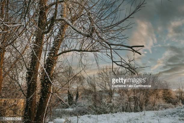 snowy outdoor scene - plant part stock pictures, royalty-free photos & images