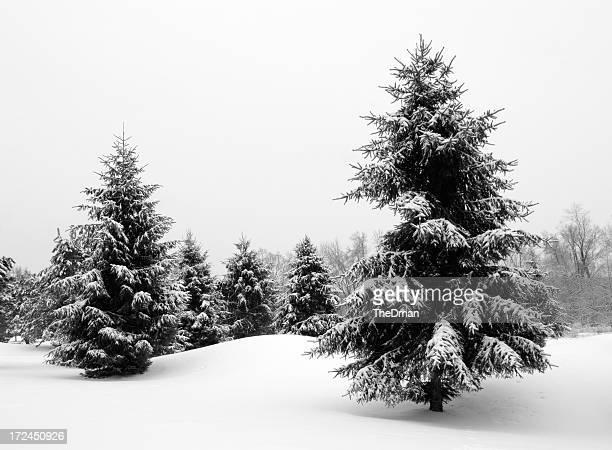 A snowy outdoor winter wonderland