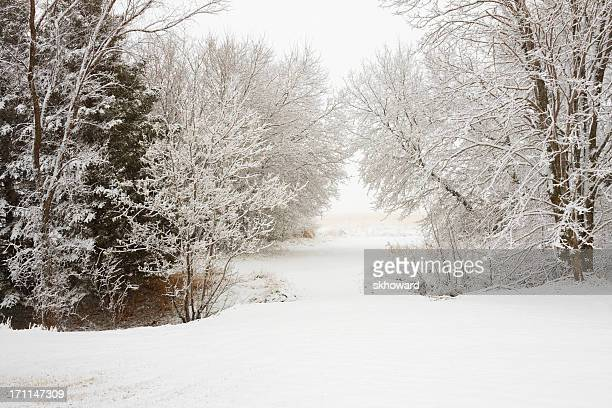 snowy path through the trees - deciduous tree stock pictures, royalty-free photos & images