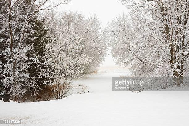 nívea camino a través de los árboles - árbol de hoja caduca fotografías e imágenes de stock