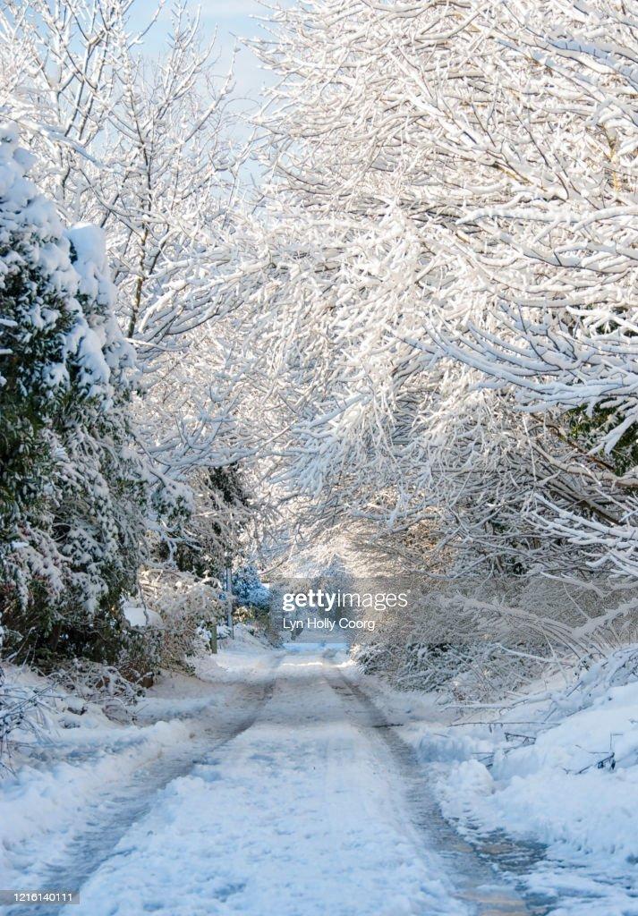Snowy path with tree canopy : Stock Photo