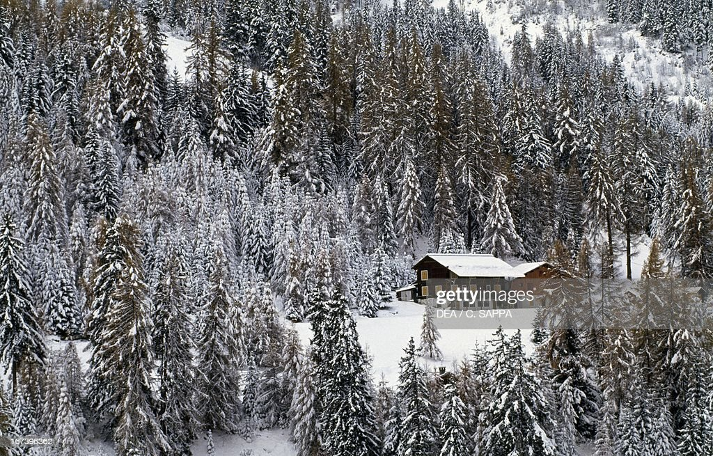 Snowy pinewood and chalet : News Photo