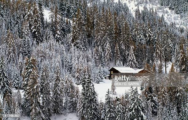 Snowy pinewood and chalet La Plagne RhoneAlpes France