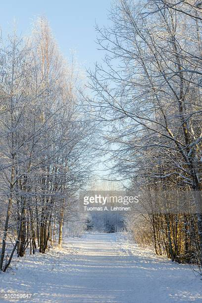 Snowy trees next to snowy footpath at a sunny day