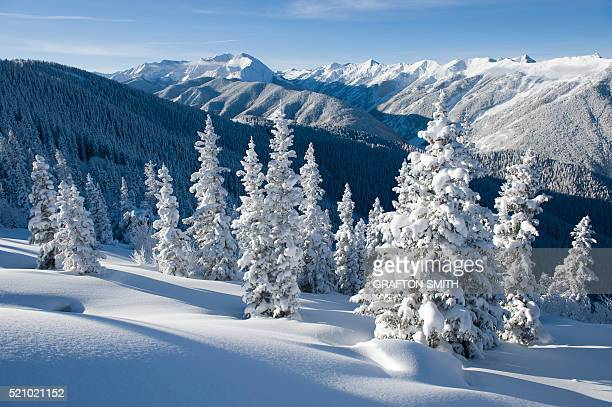 Snowy Trees on Aspen Mountain