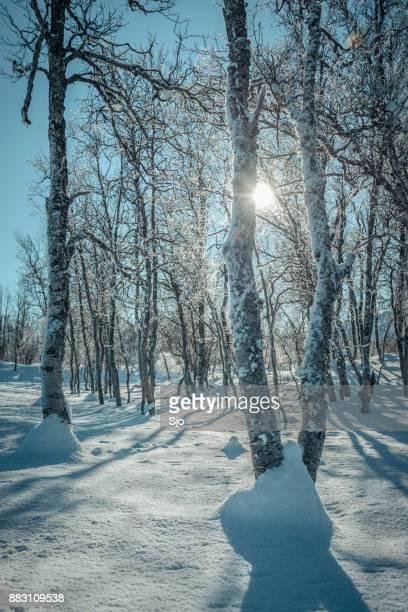 Besneeuwde winterlandschap op het eiland Senja, Noorwegen