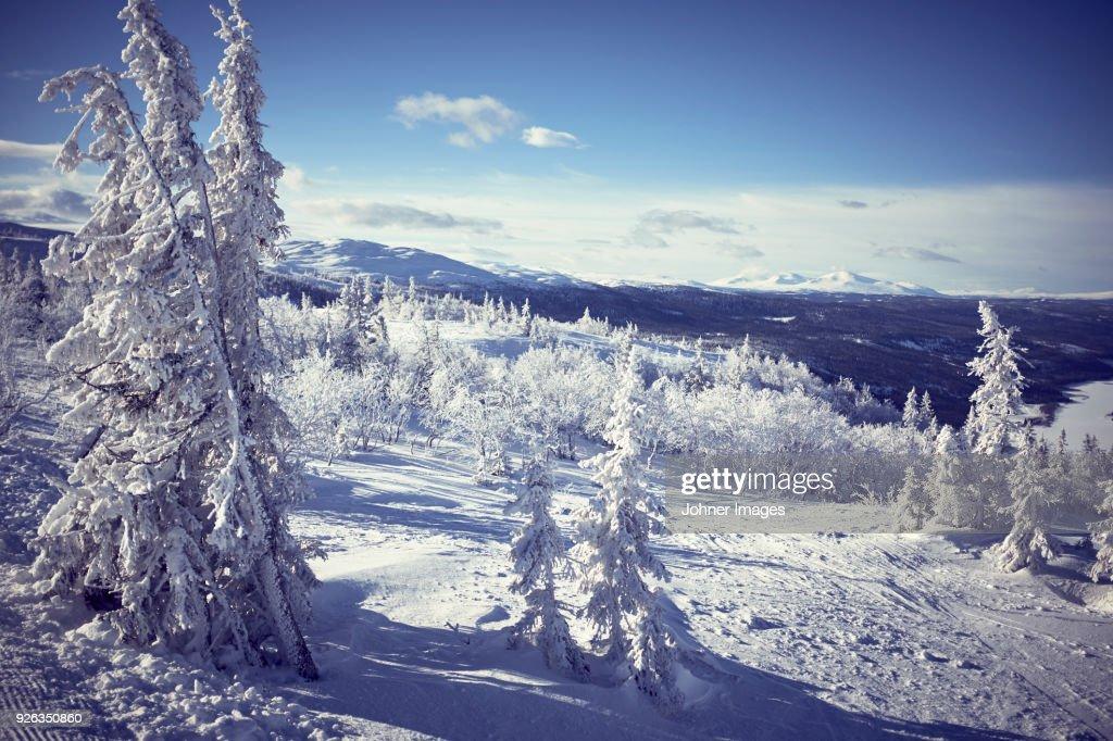 Snowy winter landscape : Stock Photo