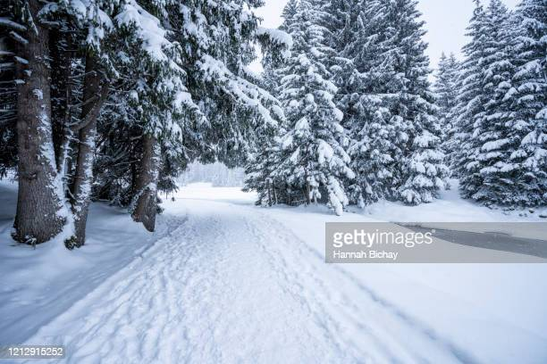 snowy winter scenery with frozen stream and lake - hannah brooks stock pictures, royalty-free photos & images