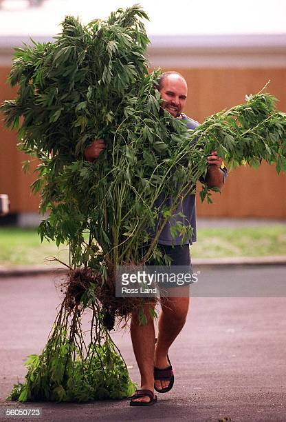 Snr Seargent Dave Ollernshaw of the Howick police carries some of the 75 canabis plants siezed in a raid The plants have an estimated street value of...