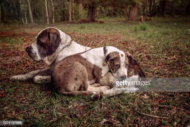 snuggles - lianne loach - fotografias e filmes do acervo