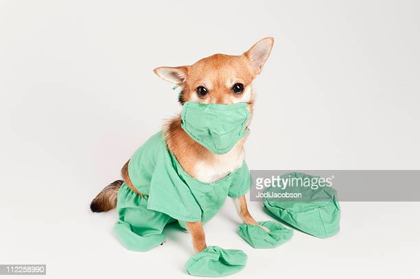 so, you want to be a doctor - dog mask stock pictures, royalty-free photos & images
