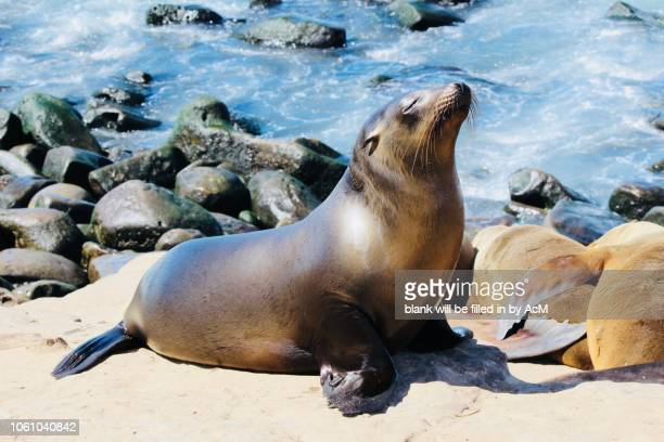 soaking up the sun - la jolla stock pictures, royalty-free photos & images
