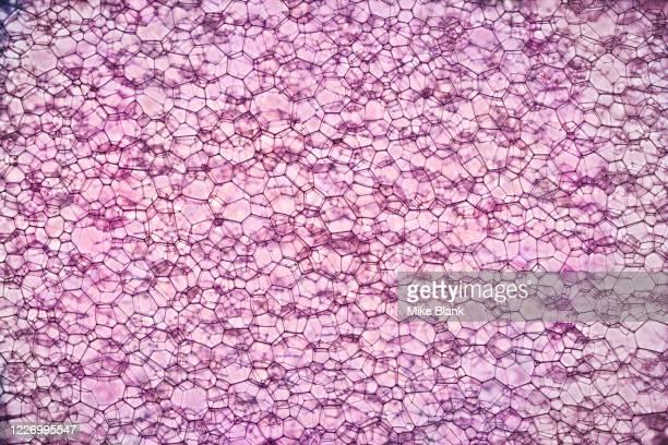 soap bubbles - materia foto e immagini stock