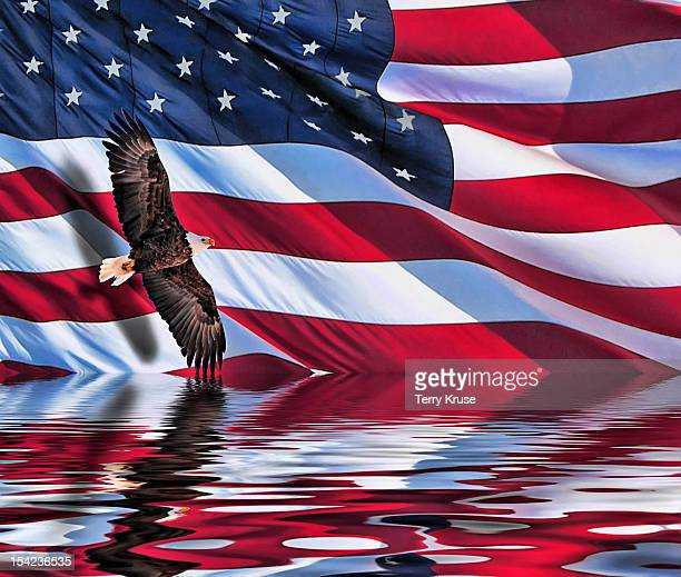 soaring bald eagle composite with an american flag - bald eagle with american flag stock pictures, royalty-free photos & images