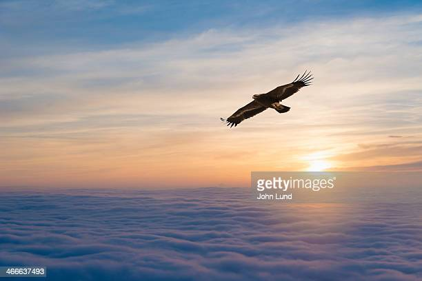 soaring eagle - eagle flying stock pictures, royalty-free photos & images