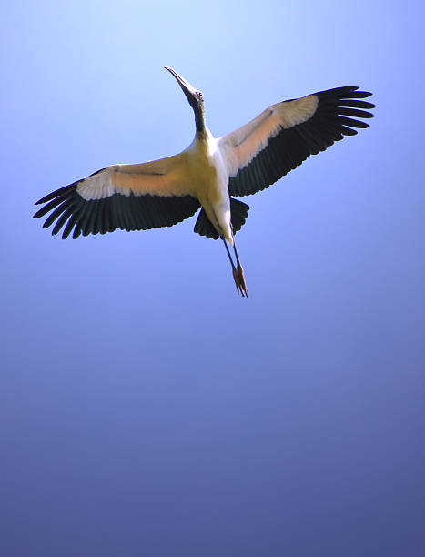 Soaring Stork Wall Art