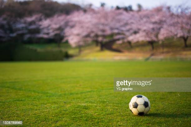 a soccer ball lying on the grass field. - club football stock pictures, royalty-free photos & images