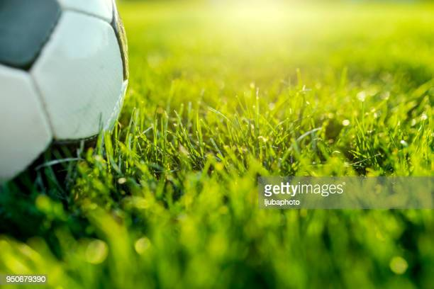 soccer ball on green gras - football stock pictures, royalty-free photos & images