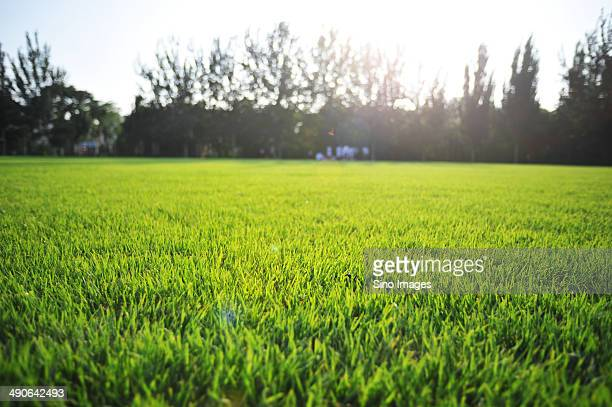 soccer field - image stock pictures, royalty-free photos & images