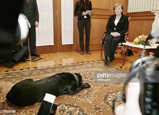 Russian President Vladimir Putin's dog Koni makes an unusual appearance and sits next to German Chancellor Angela Merkel during the working meeting...