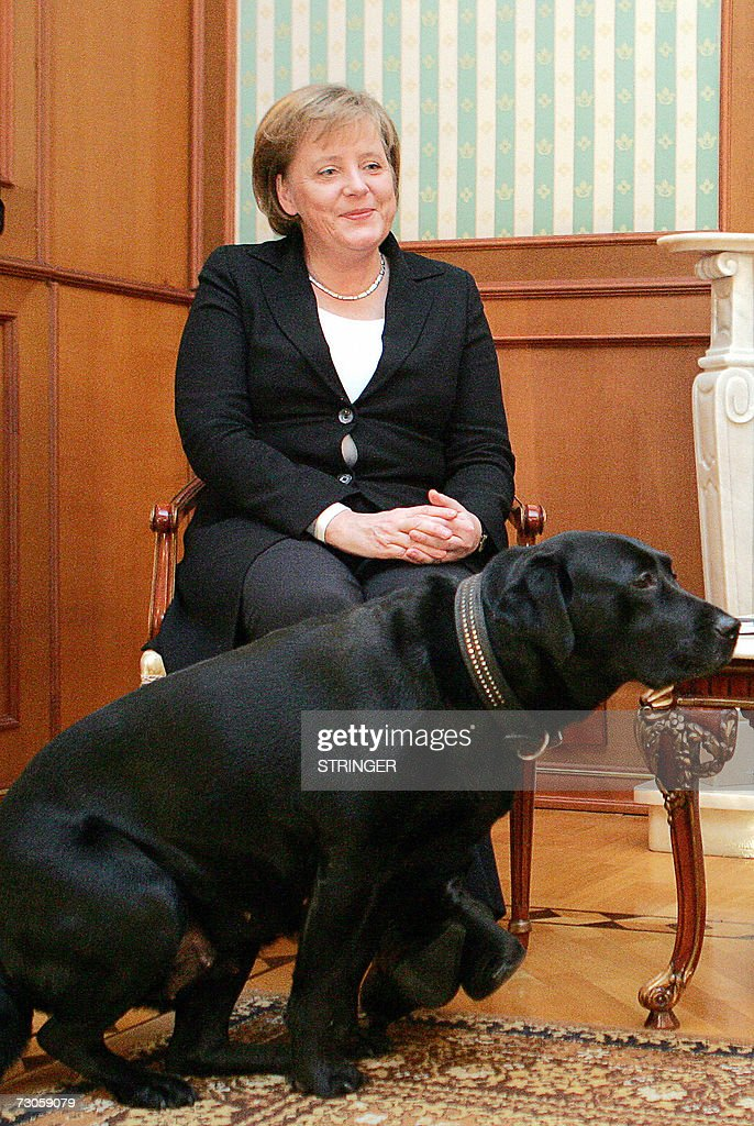 Russian President Vladimir Putin's dog Koni makes an ...