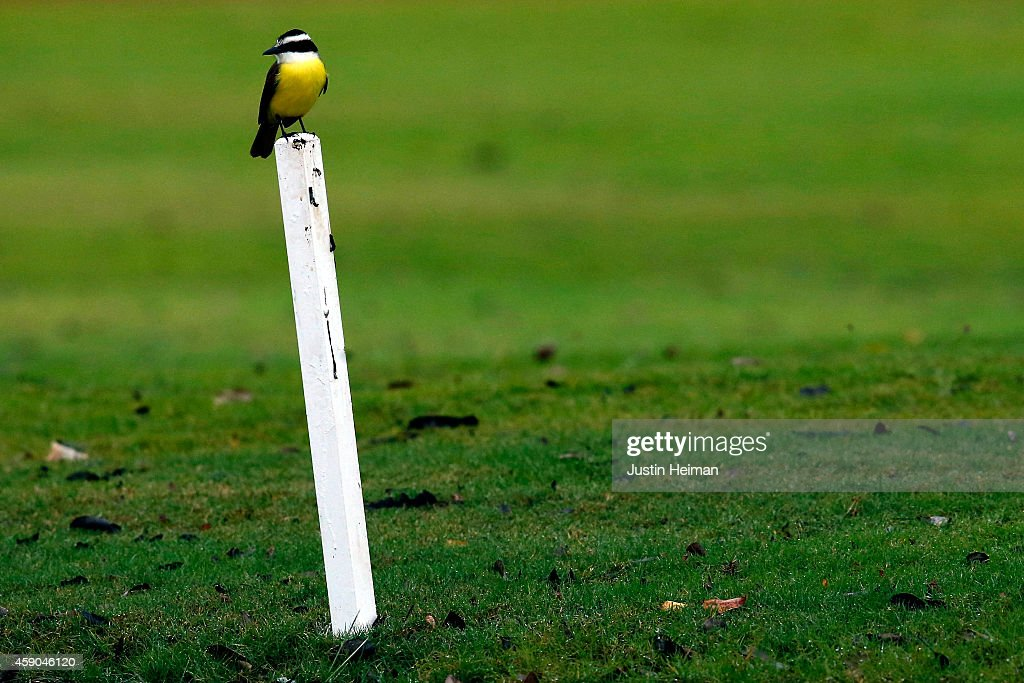 A Social flycatcher sits perched on a pylon during the third round of the OHL Classic at Mayakoba on November 15, 2014 in Playa del Carmen, Mexico.
