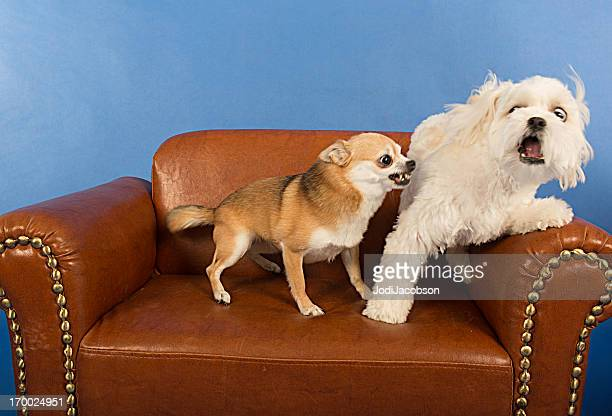 Rencontres adulte Dogs- OMG J'ai peur !