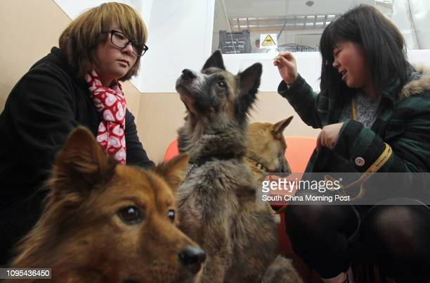 Socially withdrawn youths Kwai and Ching play with dogs Katy, Lily and Ngau Yee during Chinese Evangelical Zion Church Social Service Division press...