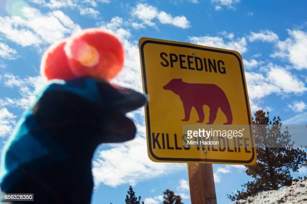 Sock Puppet looking at sign that says 'Speeding Kills Wildlife'