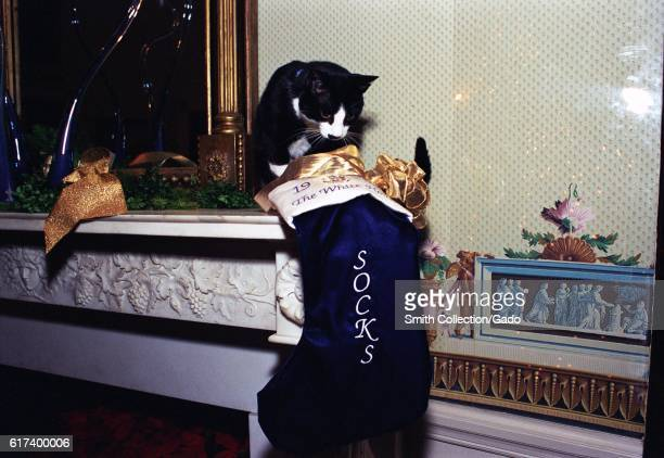 Socks the Cat, the First Pet of President Bill Clinton and First Wife Hillary Rodham Clinton, with black fur, white face, and amber eyes, perched on...