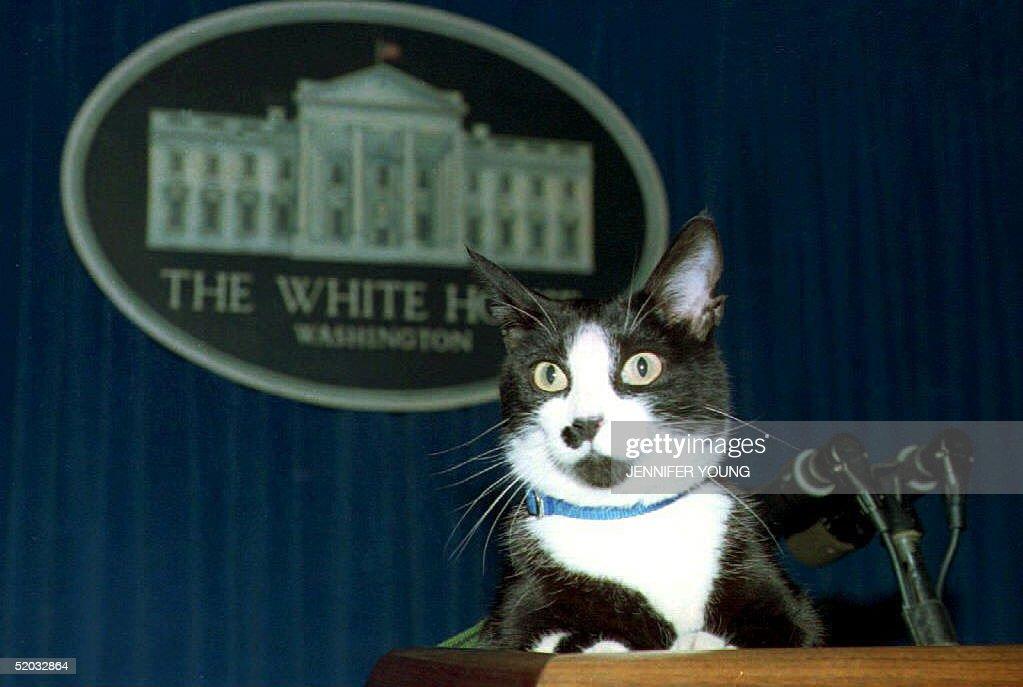 Past Political Pets