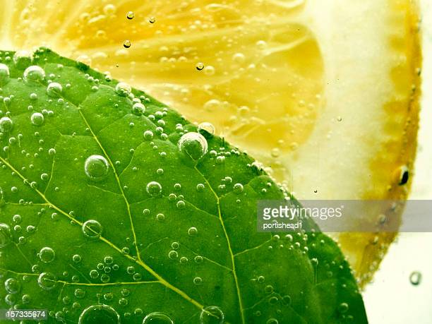 soda, lemon and mint - lemon leaf stock photos and pictures