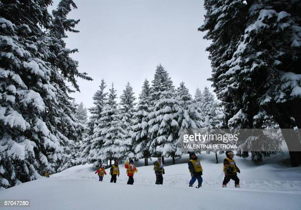 Children of a ski school slide on a path in Vitosha Mountains near the capital Sofia 08 March 2006 Every year more British skiers flood Bulgaria's...