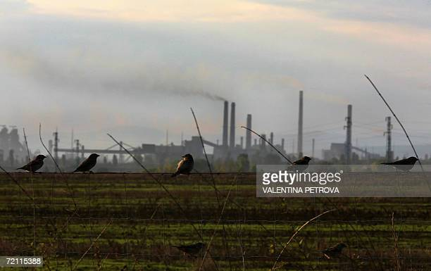 TO GO WITH AFP STORY 'Bulgaria's biggest industrial polluters struggle to meet EU eco norms' A flock of sparrows rest on a fence backdropped by the...