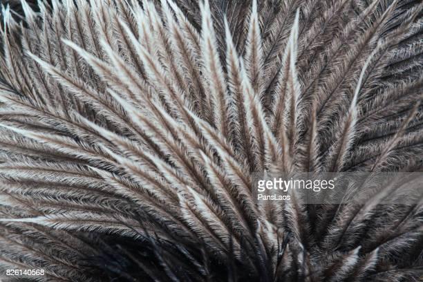 soft bird feather texture - struisvogelveer stockfoto's en -beelden