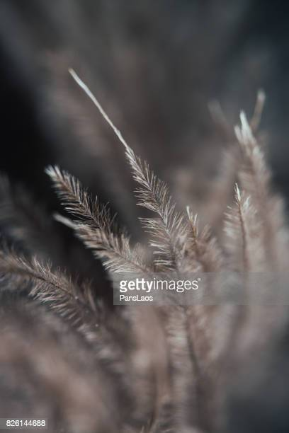 soft bird feather texture