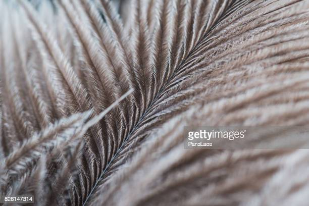 soft bird feather texture - ostrich feather stock pictures, royalty-free photos & images