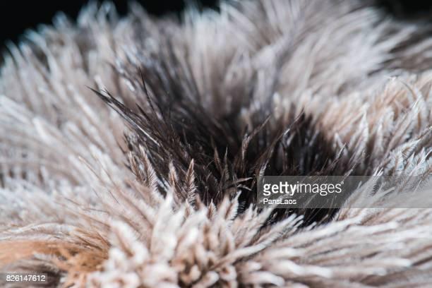 soft bird feather texture