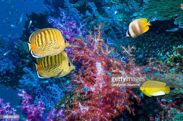 Soft coral and tropical fish
