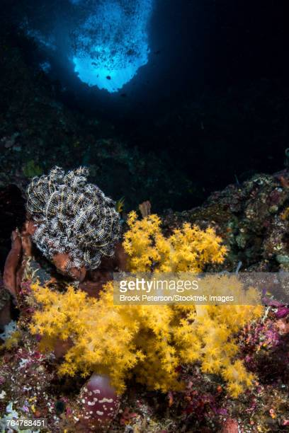 Soft coral in a crevice, North Sulawesi, Indonesia.